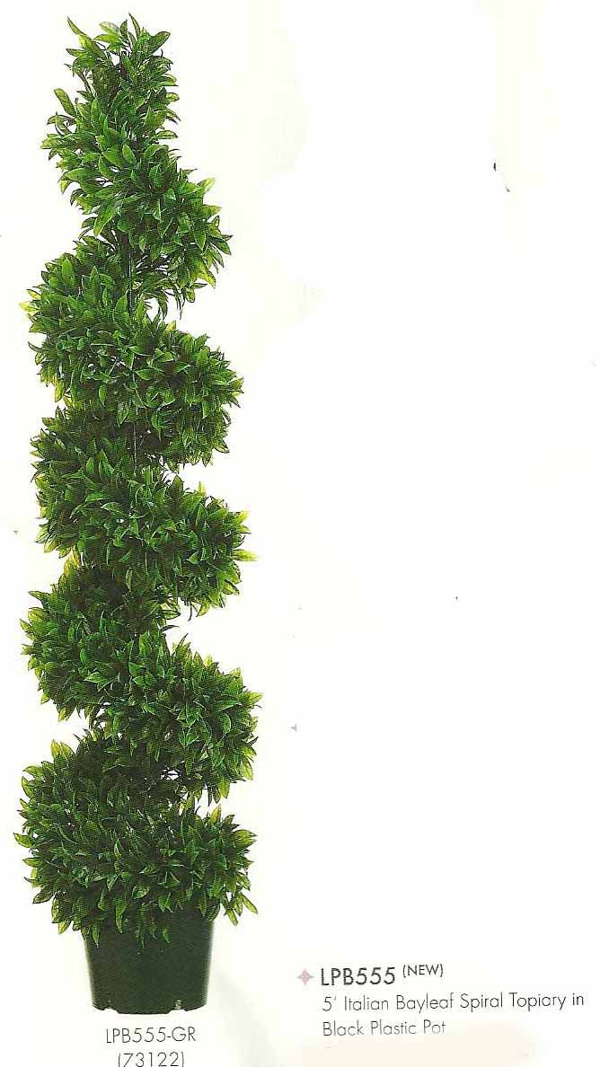 5 feet Italian Bayleaf Spiral Topiary in Black Plastic Pot Green