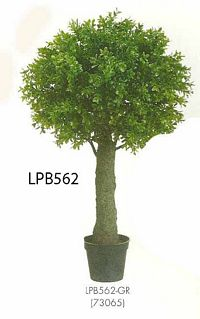 27 and 5 inch Boxwood Ball Topiary in Plastic Pot Green