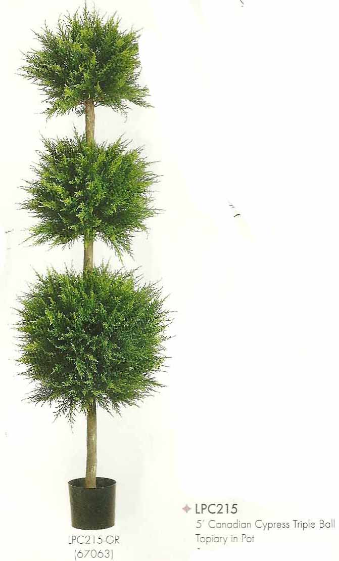 5 feet Canadian Cypress Triple Ball Topiary in Pot Green