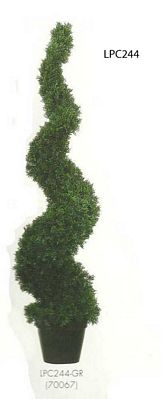 4 feet Cedar Spiral Topiary with 1036 leaves in Round Black Plastic Pot Green