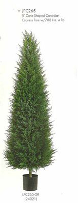 5 feet Cone Shaped Canadian Cypress Tree with 788 leaves in Pot Green