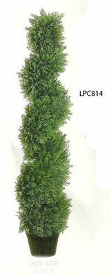 4 feet Spiral Cedar Topiary in Plastic Pot Green