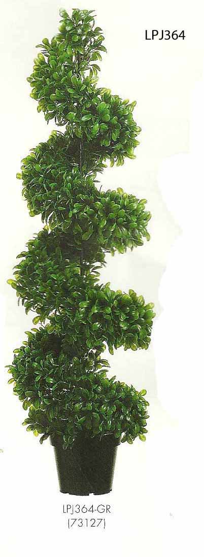4 feet Jade Plant Spiral Topiary in Black Plastic Pot Green