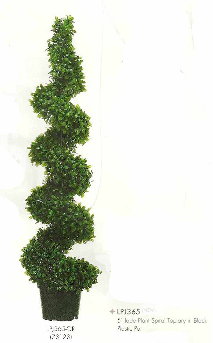 5 feet Jade Plant Spiral Topiary in Black Plastic Pot Green