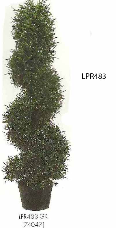3 feet Rosemary Spiral Topiary in Plastic Pot Green
