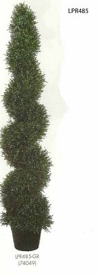 5 feet Rosemary Spiral Topiary in Plastic Pot Green