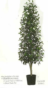 5 feet Laurel Tree with 1005 leaves in Black Plastic Pot Green