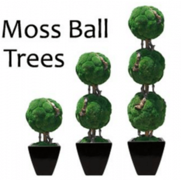 Double Moss Ball Bonsai Topiary