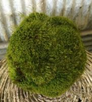 "9"" Preserved Moss Ball"