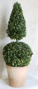30 inch   Preserved Boxwood Ball Cone