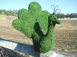 Peacock Frame Topiary with Moss 16 inches tall