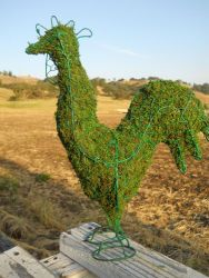 Rooster Frame Topiary with Moss 15 inches tall