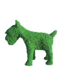 Schnauzer Frame Topiary with Moss 12 inches tall