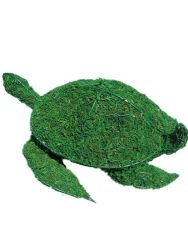 Sea Turtle Frame Topiary with Moss 6 inches tall
