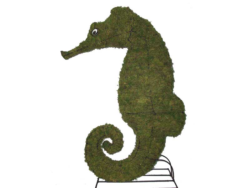 Seahorse Mossed Topiary, 24 inch  (Mossed) 24 inch  x 16 inch  x 6 inch