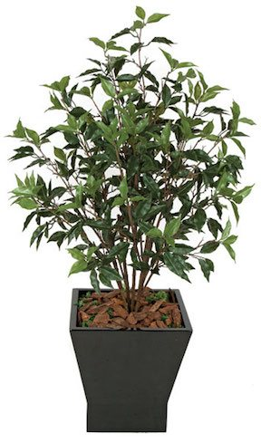 48 Inch Ficus Bush   Green