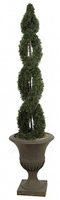 6 Foot Double Spiral Cypress Topiary