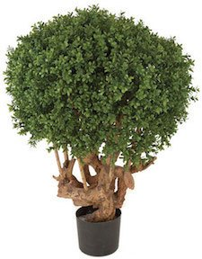 35 inch Boxwood Ball Topiary