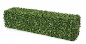 48 Inch  x 12 Inch x 12 Inch Boxwood Hedge