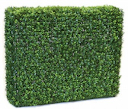 36 Inch x 12 Inch  x 30 Inch Boxwood Hedge