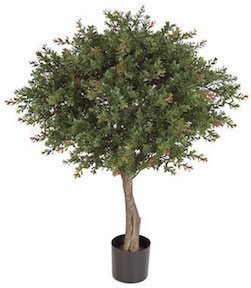 33 Inch Wintergreen Boxwood Topiary   Green and Red