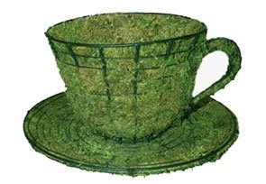 Teacup & Saucer, 6 inch  (Mossed) 6 inch  x 12 inch  x 12 inch