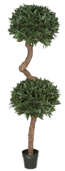 6 Foot French Laurel Topiary