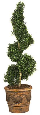 boxwood spiral topiaries